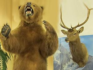 Stuff Bears